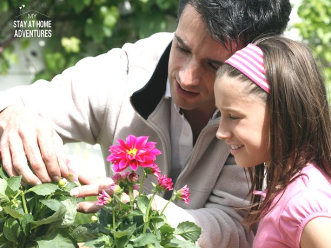 Father and daughter in garden taking care of pink flowers