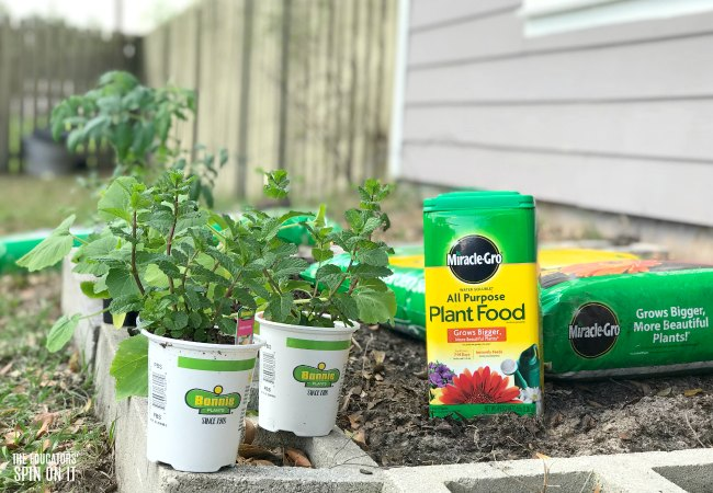 Using Miracle-Gro in your Vegetable Garden this Spring