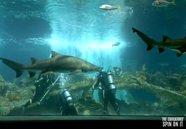 Cleaning the Shark Tank at the OdySea Aquarium