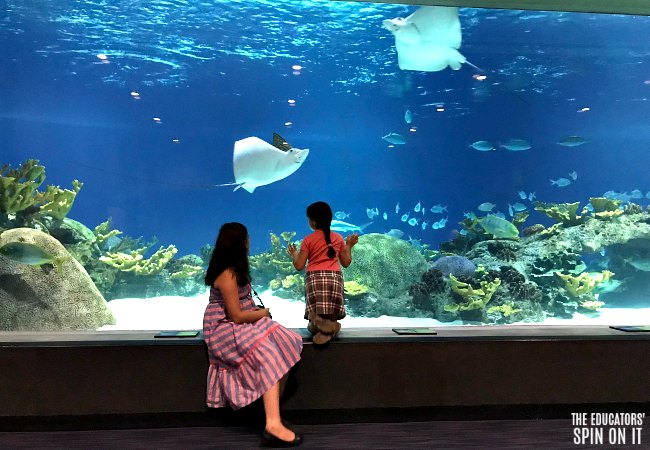 OdySea Aquarium Deep Sea Exhibit