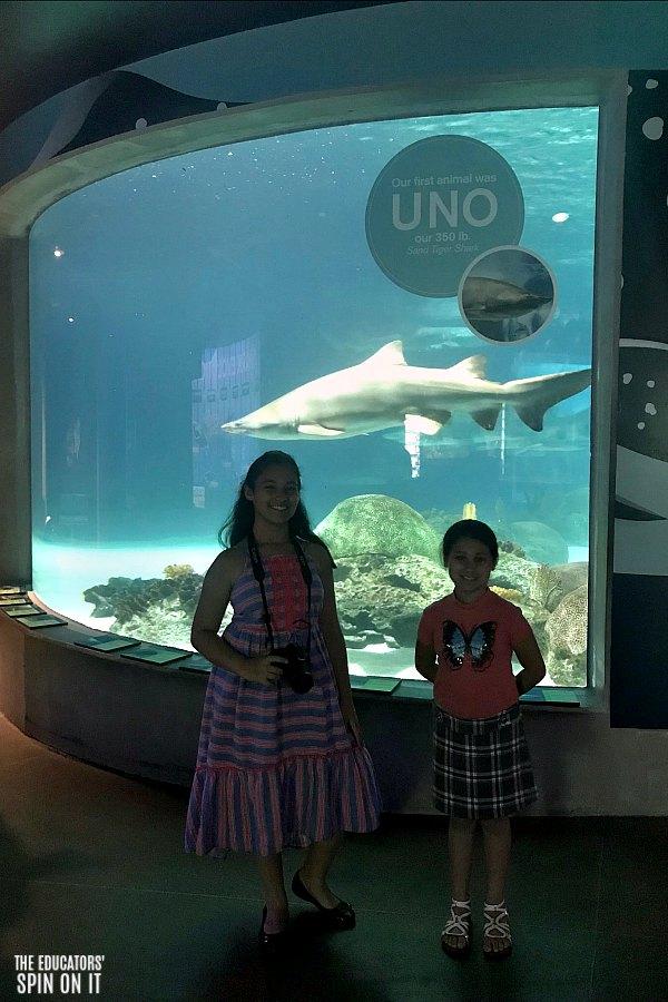 OdySea Aquarium featuring Sharks