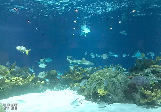 Odysea Aquarium in Scottsdale Arizona with sharks, sea turtles, sting rays and fish.