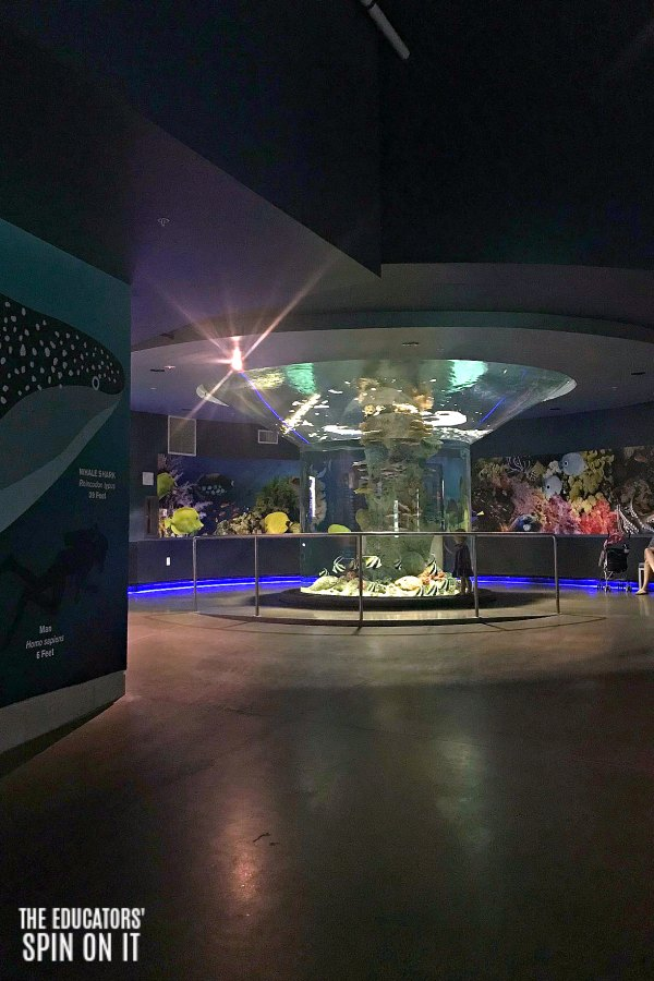 Unique Aquariums to Explore at the OdySea Aquarium