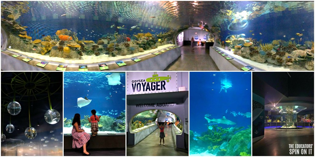 Visiting the OdySea Aquarium in Arizona with Kids