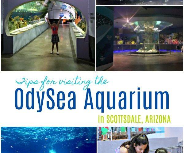 Tips for Visiting the OdySea Aquarium in Arizona