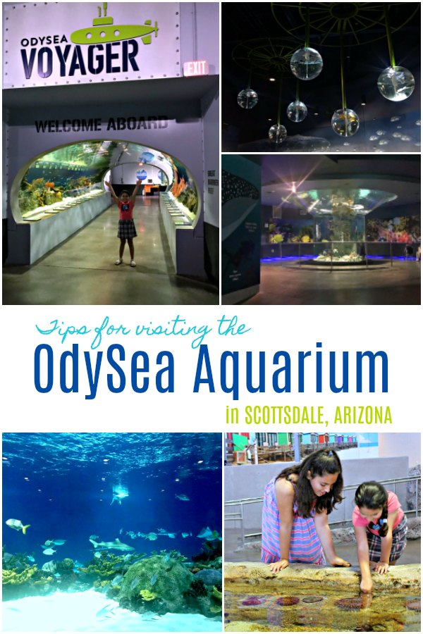 Visiting the OdySea Aquarium in Scottsdale Arizona