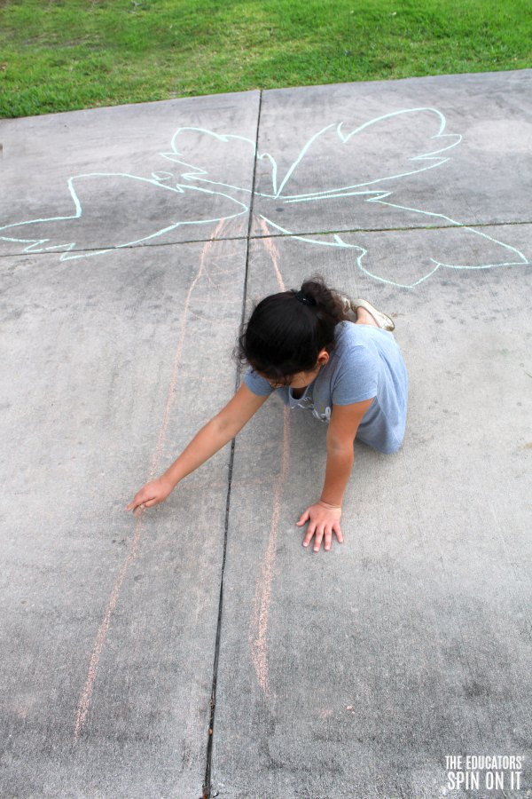 Child drawing tree trunk of Coconut Tree with sidewalk chalk