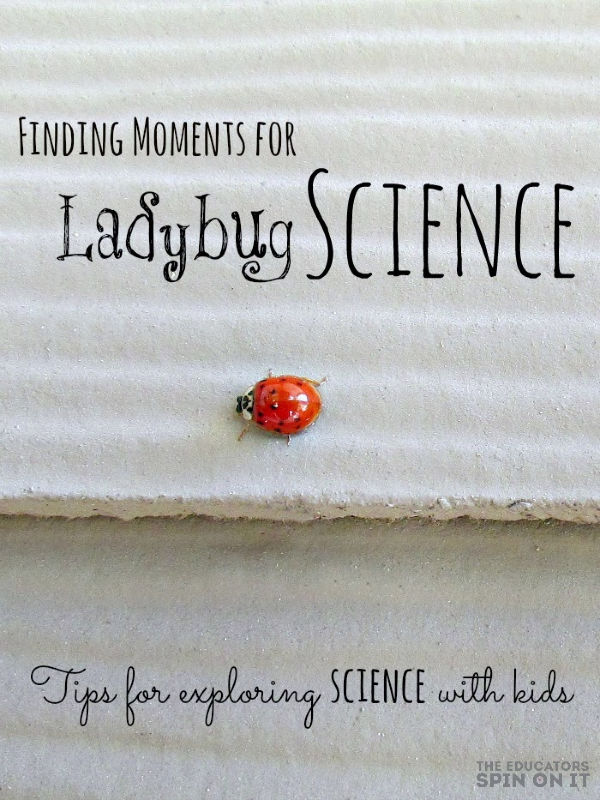 Ladybug on side of home for kids with tips to explore ladybug science
