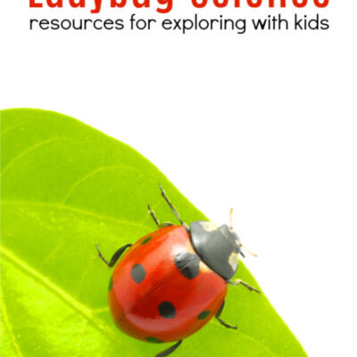 Ladybug Science with Kids