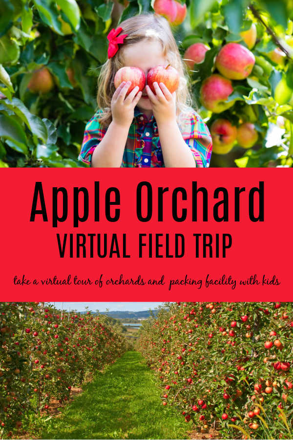 Child picking apples at Apple Orchard as part of field trip to Apple Packing Facility