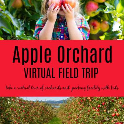 Preschool Apple Theme Activities