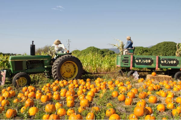Hayride on pumpkin patch for fall virtual field trip for kids