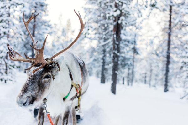 Reindeer in snow covered woods to highlight ideas for winter virtual tours for kids ideas