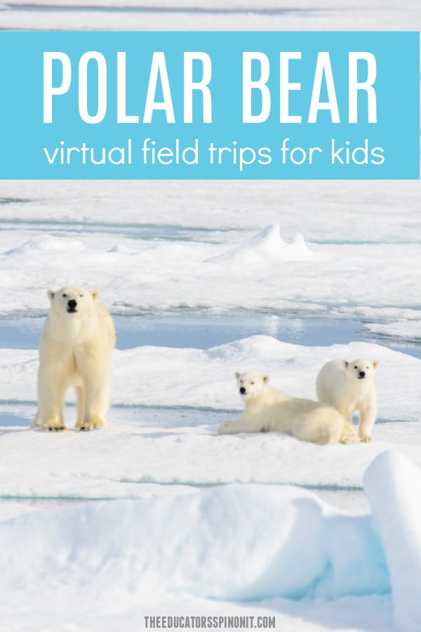 Polar Bear Virtual Field Trips for Kids