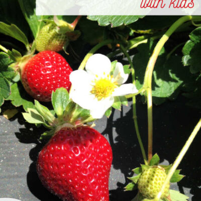 Growing Strawberries – Is it worth it?