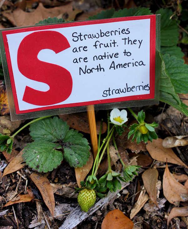 strawberry garden marker for backyard gardening with kids