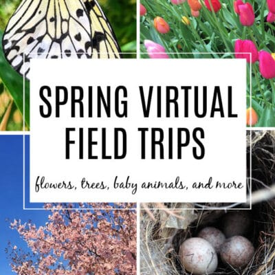 Spring Virtual Field Trips for Kids