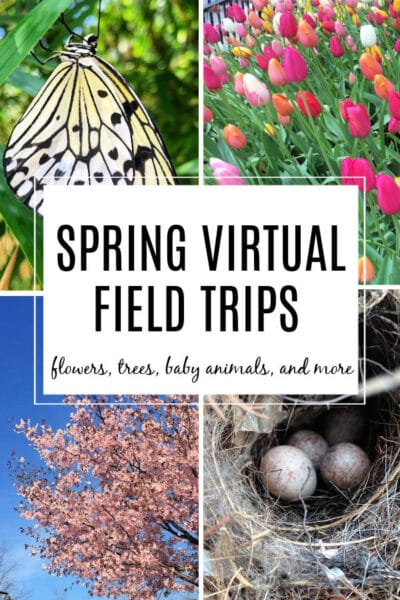 spring virtual field trips for kids with flowers, trees, baby animals and more