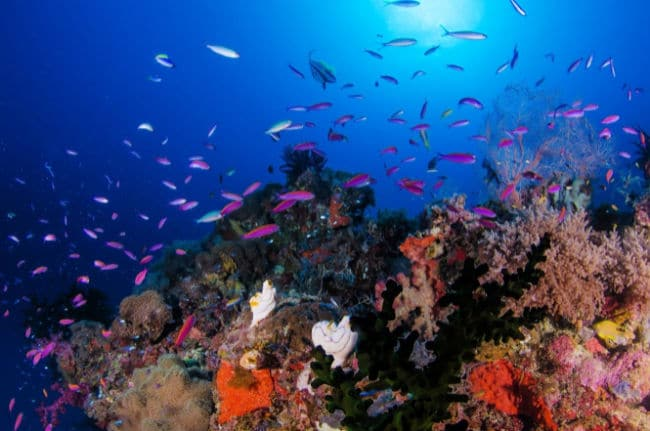 Coral Reef with purple fish and colorful coral for ocean themed virtual field trip for kids