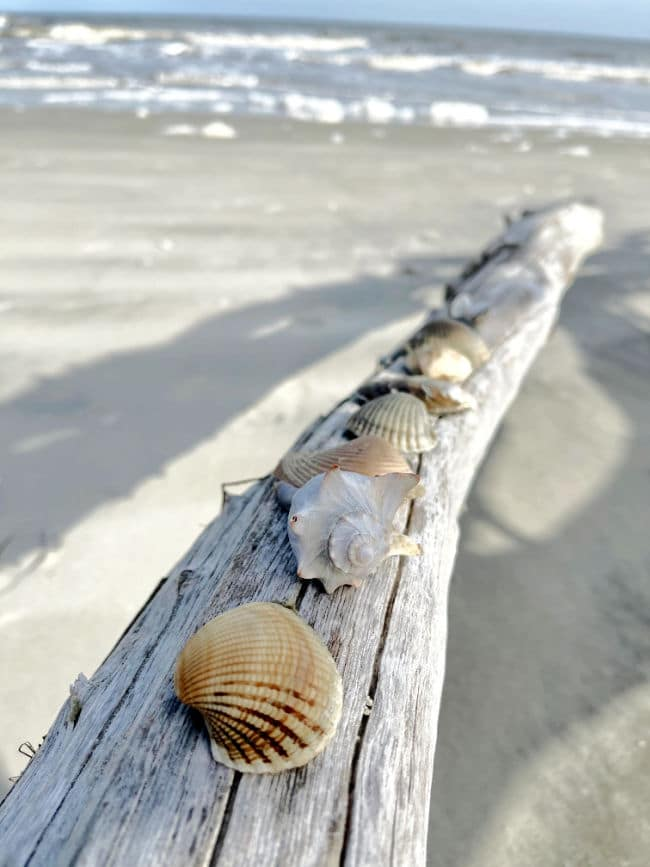 Several types of seashells on driftwood on beach with waves