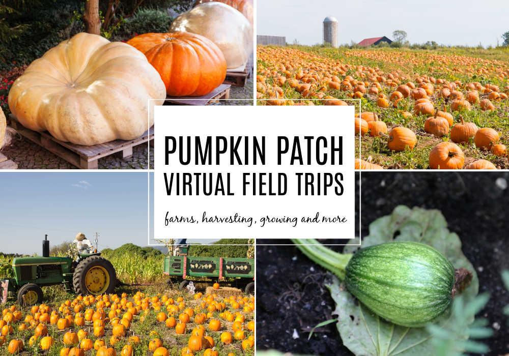 Pumpkin Patch Virtual Field Trips for Kids