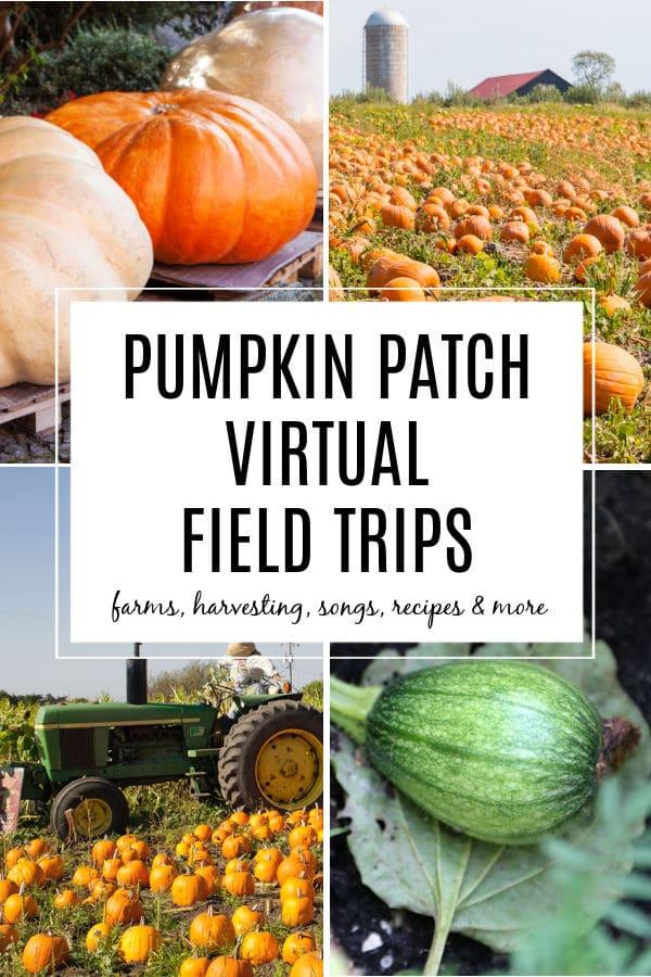Virtual Pumpkin Patch Field Trips for Kids